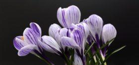 Måndag 30 April Har Vi Planeringsdag.